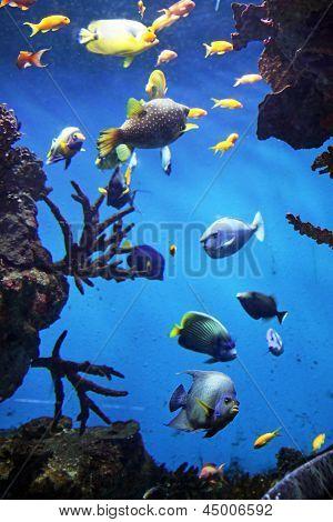 Acquarium with submarine life