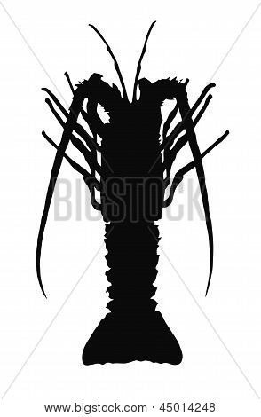 One crayfish silhouette.
