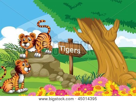 Illustration of the two tigers near the signboard