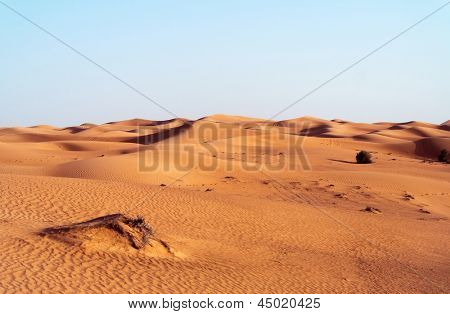 desert dune background on blue sky.Arabian desert near the city of Dubai. part of the hot desert with bushes and clumps