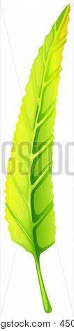 Ilustración de una hoja alargada verde sobre un fondo blanco