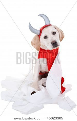 Bad Labrador retriever puppy dog in devil costume with toilet paper on white background