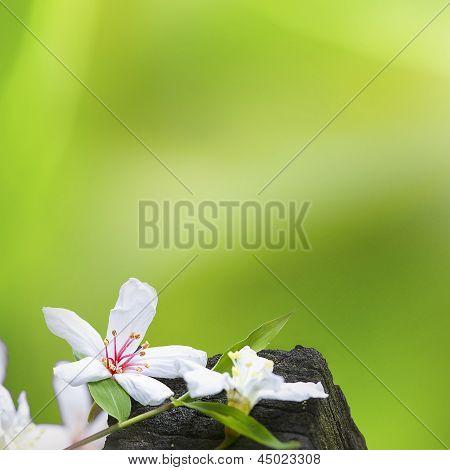 Fallen tung flowers