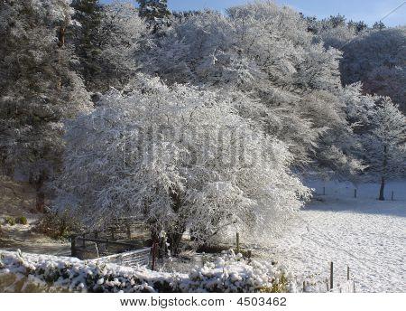 Idylic Snowfall