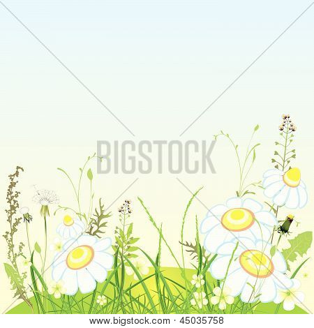 Green landscape, flowers and grass meadow