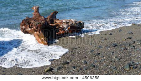 Driftwood On A Pebble Beach