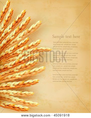 Espigas de trigo no fundo de papel velho. Ilustração vetorial