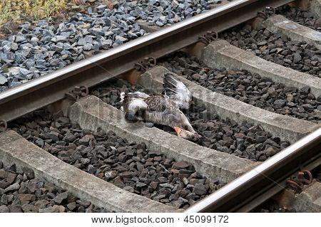 Railroad Kill