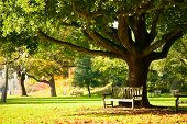 stock photo of bench  - Bench under the tree in the Royal Botanic Gardens in London - JPG