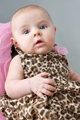 foto of dress-making  - Cute newborn baby girl in leopard print dress young fashionista - JPG