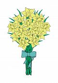 picture of narcissi  - Illustration of bouquet of yellow narcissi with bow - JPG