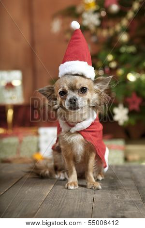 Christmas Dog With Stocking Cap