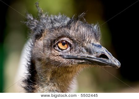 Emu With Dreadlocks