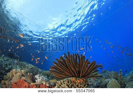 Coral Reef underwater with featherstar and anthias fish