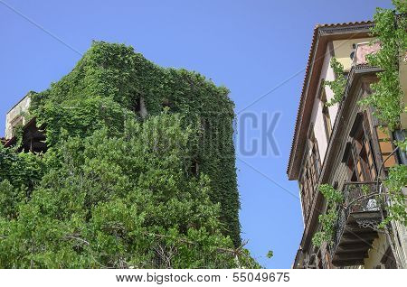 Outdated building completely overgrown with greenery in old town