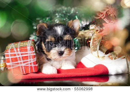 puppy wearing a santa hat