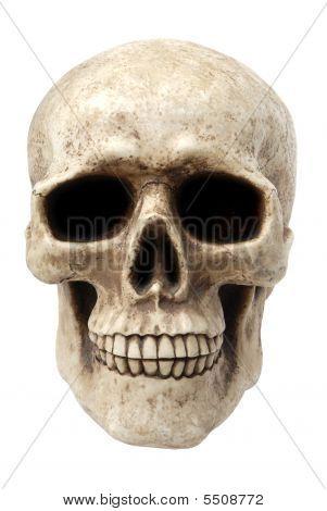 Human Skull Face