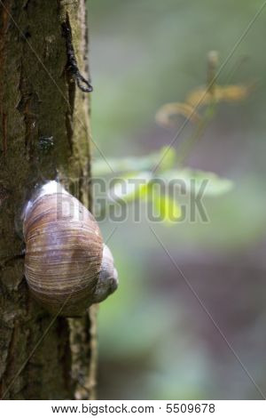 Snail On Tree