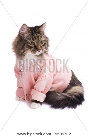 Cat Clothed Pink Bathrobe.