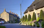 stock photo of english cottage garden  - Clipped topiary outside thatched cottage - JPG