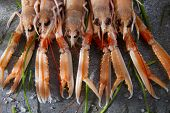 picture of norway lobster  - Marine Product Presentation And Preparation Of The Crayfish - JPG