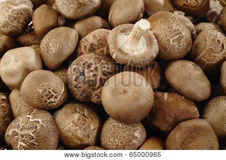 Fresh Shiitake Mushrooms Background