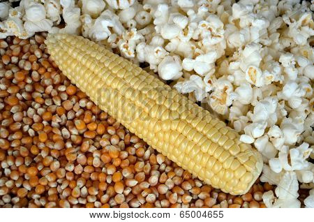 Forms of corn