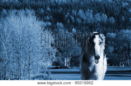 large surreal Borzoi sight-hound emerging from out of dark forest