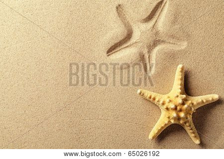 Seashell with imprint on beach sand