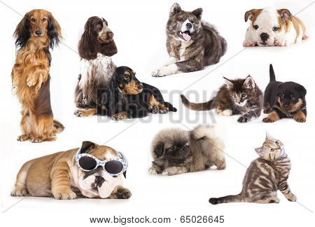 group of dogs and Cat,  set