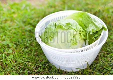 Lettuce Salad In Spinner