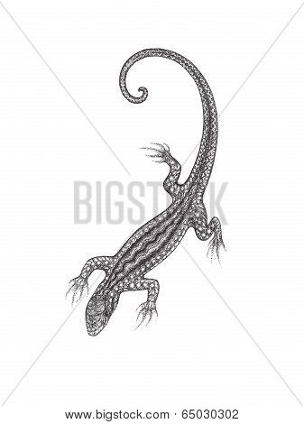 The Drawn Lizard On A White Background In The Style Of Pointillism.
