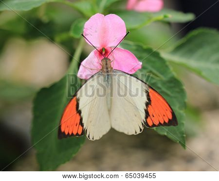 butterfly on blooming flower in the garden