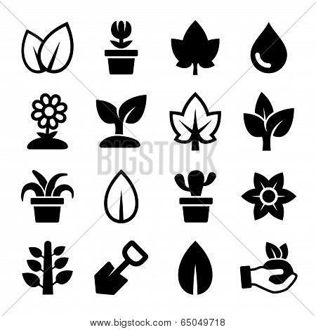 Leaf and Plants Icons Set