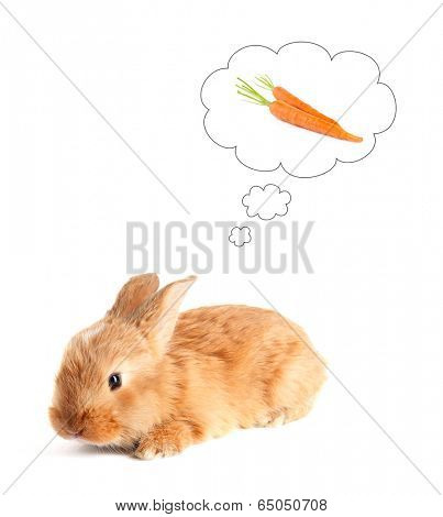 Fluffy foxy rabbit dreaming of carrots, isolated on white