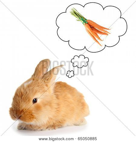 Fluffy foxy rabbit dreaming of carrot,  isolated on white