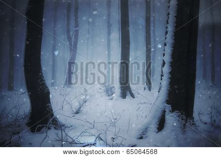 Dark forest in winter