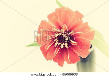 Vintage Sear Flower