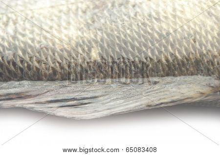 fish scales grunge texture back ground