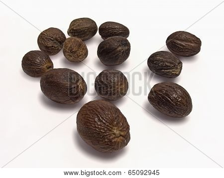 Fruit Of Knema Attenuata. Wild Nutmeg