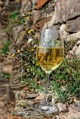 image of moselle  - Full glass of Riesling wine on slate rock - JPG