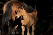 foto of colt  - An emotional image of a colt standing next to its mother - JPG