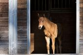 picture of colt  - A small colt stands just inside of the small stables and at the edge of light near Hayden Idaho - JPG