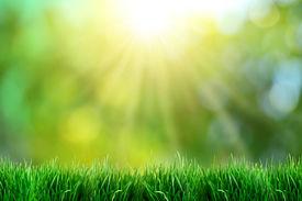 image of garden-art  - Green grass with sunset views - JPG