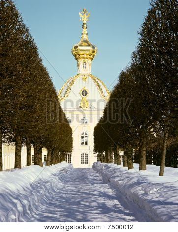 Winter's Garden In Peterhof