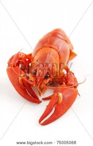 Fresh boiled crawfish on white isolated background