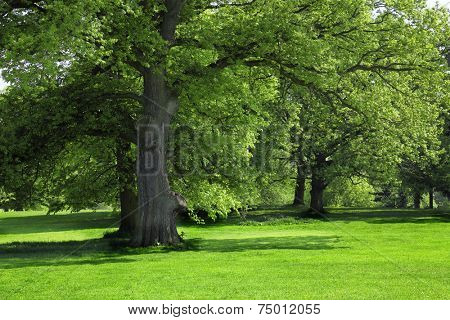 Green grass under Big tree