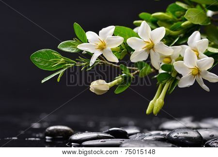 Still life with branch gardenia with black stones