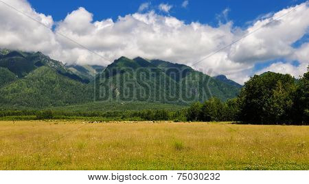 Pasture At The Foot Of The Mountains Of Siberia