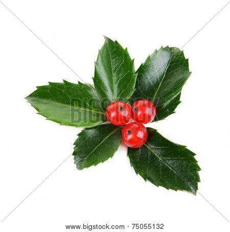Leaves of mistletoe with berries isolated on white